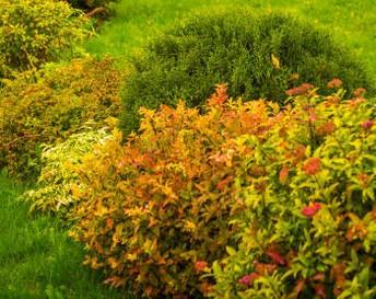 совместимость плодовых деревьев в саду